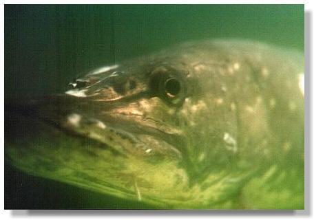 Faszination kaltwasseraquarium for Rotfeder gartenteich